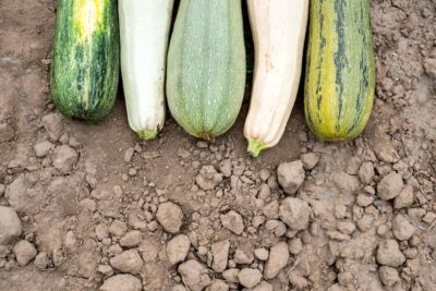 What To Do When You Have Surplus Zucchinis?