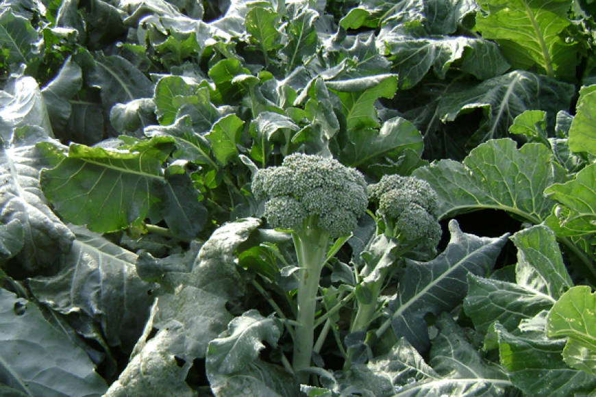 May Gardening Guide – Cold Climate