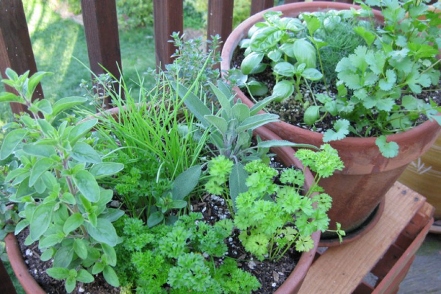 July Gardening Guide – Tropical Climate