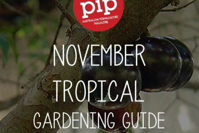 November Gardening Guide – Tropical Climate