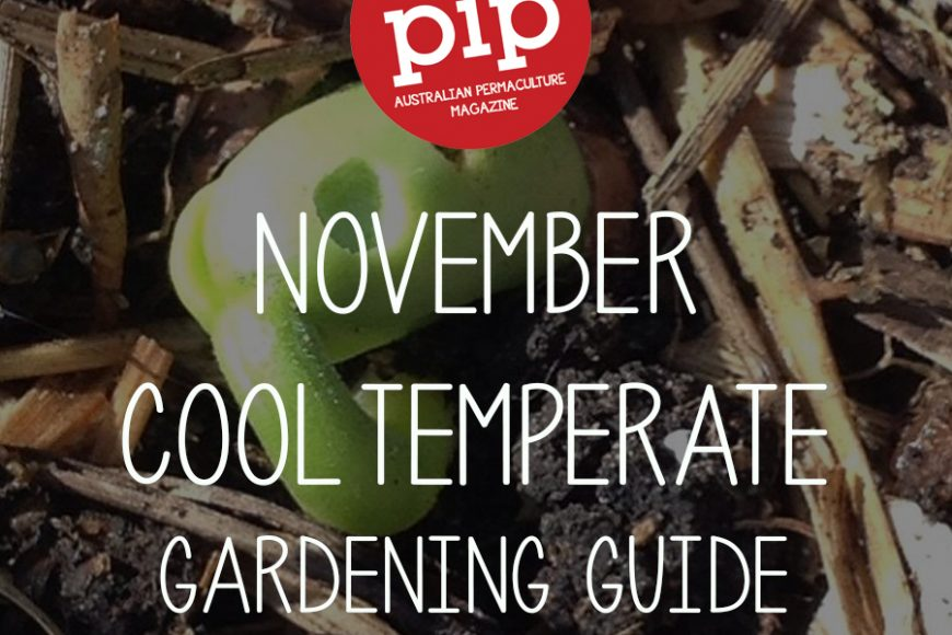 November Gardening Guide – Cool Temperate Climate