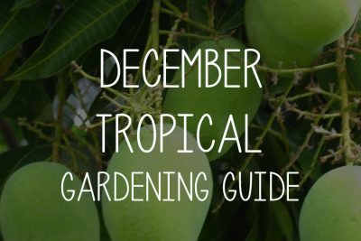 December Gardening Guide – Tropical Climate