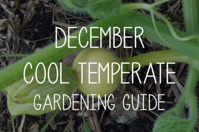December Gardening Guide – Cool Temperate Climate