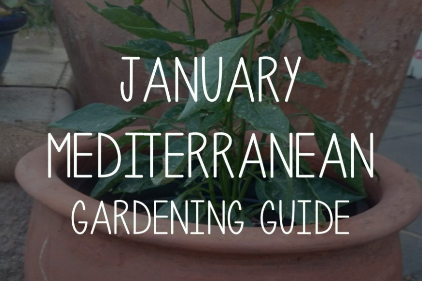 January Mediterranean Garden Guide