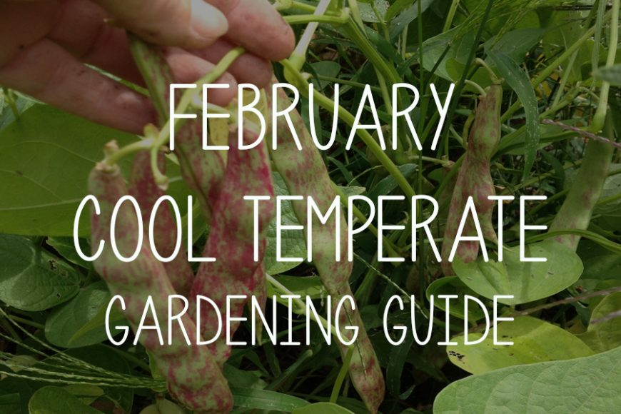 February Cool Temperate Gardening Guide