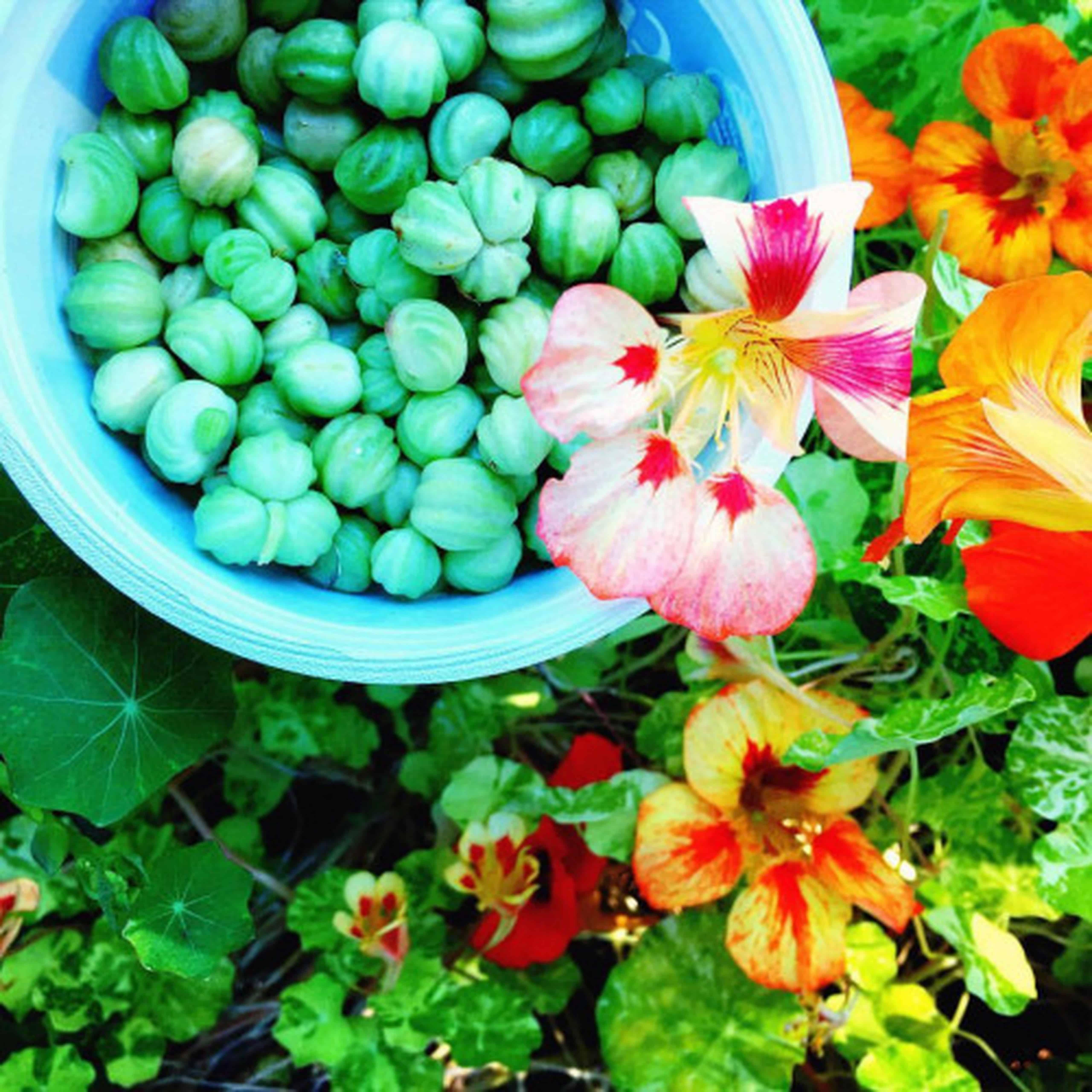 Nasturtium Capers Recipe