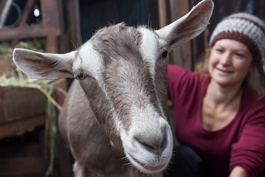 Pip Podcast #4: Backyard Goats with Maria Cameron