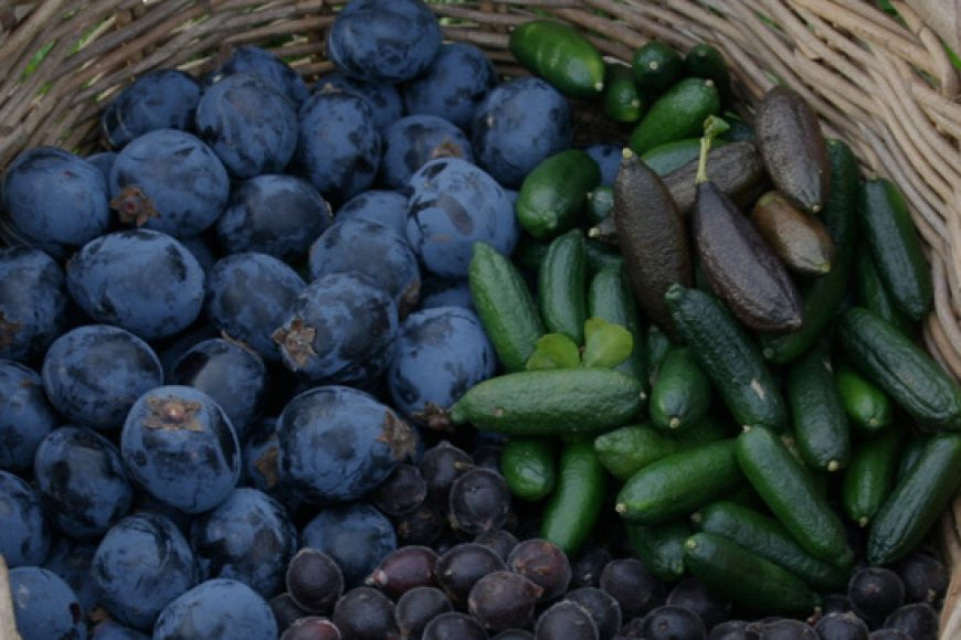 Pip Podcast #6: Bush Foods with Robyn Francis