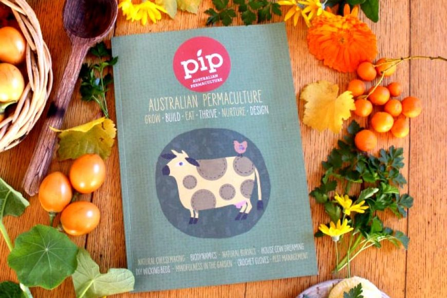 Pip Issue 11 is here!