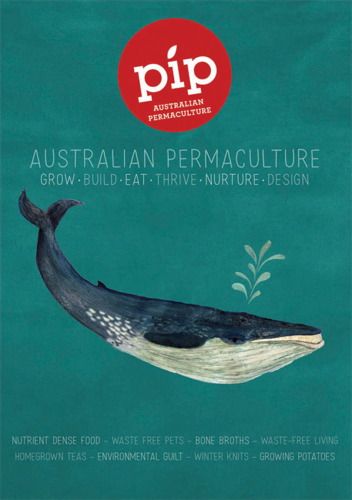 Pip issue 14 cover whale