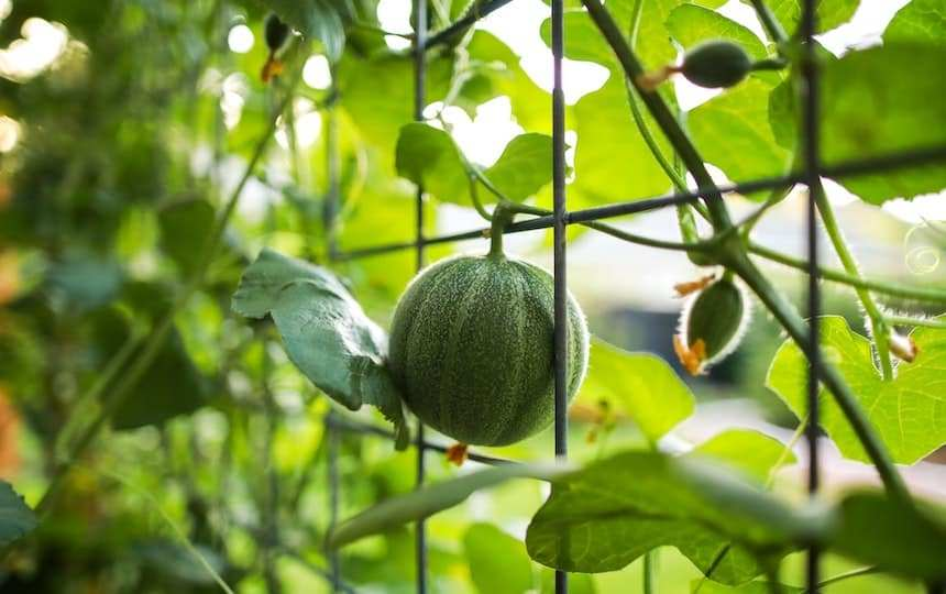 Fruit To Plant In Spring For Summer Harvests