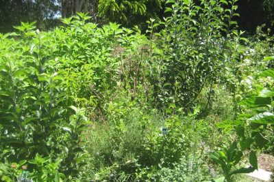 How to Start a Food Forest