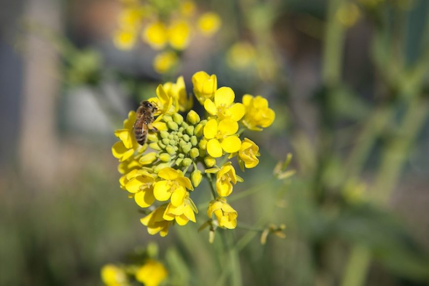 10 Ways to Help Save the Bees