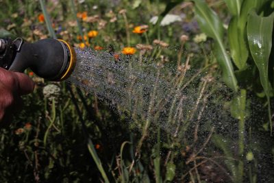 How to Water Plants While Away on Holiday