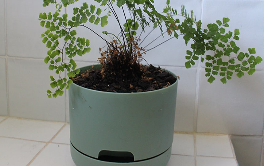 water plants while away with mr kitly pots