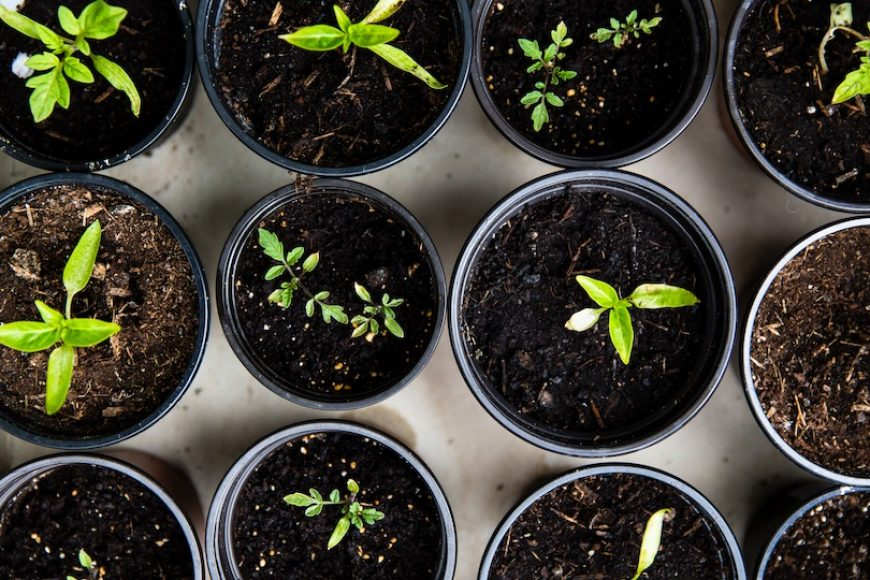 How to Grow Seedlings from Scratch: Video Series