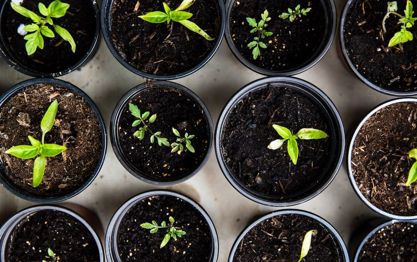 How to Grow Seedlings from Scratch