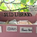 a seed library set up in response to the coronavirus global crisis