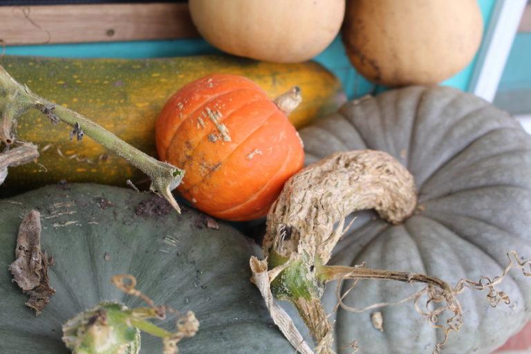 pumpkins for bartering