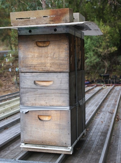 Langstroth Hive - types of beehives