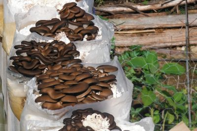 7 Ways To Use Fungi in Permaculture