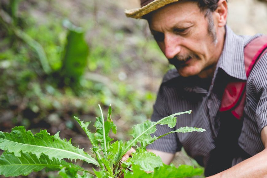 Pip Podcast #33: Diego Bonetto on Wild Harvests