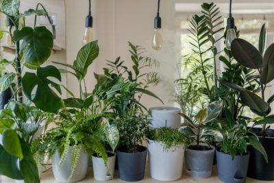 6 Indoor Plants For Beginners