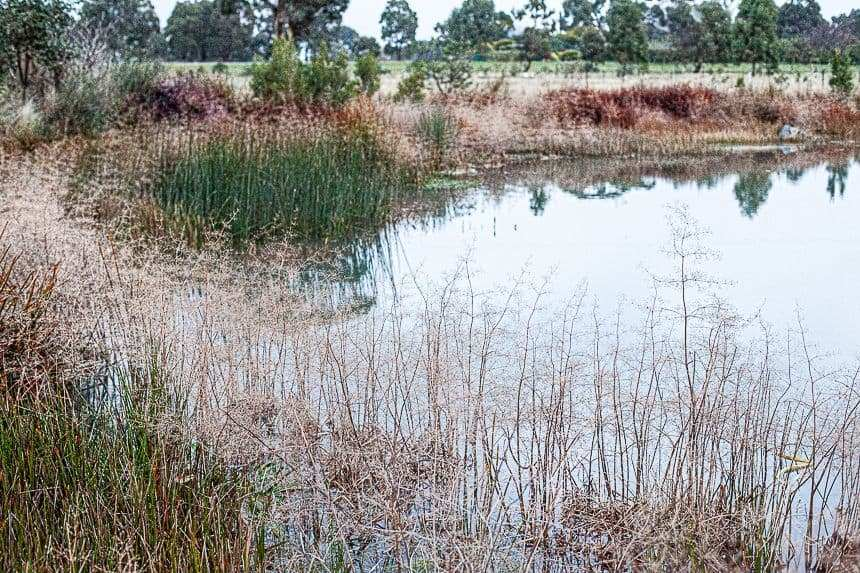 how to build a wetland