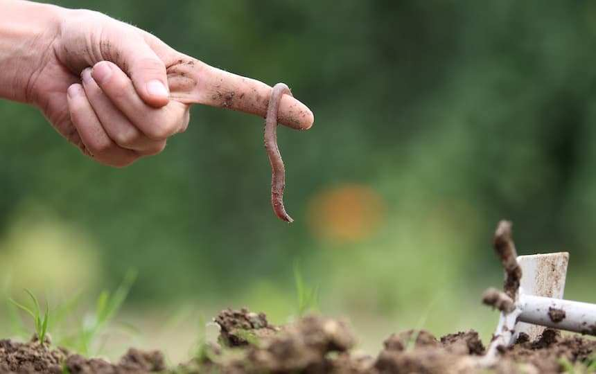 Worm Composting- A Beginner's Guide