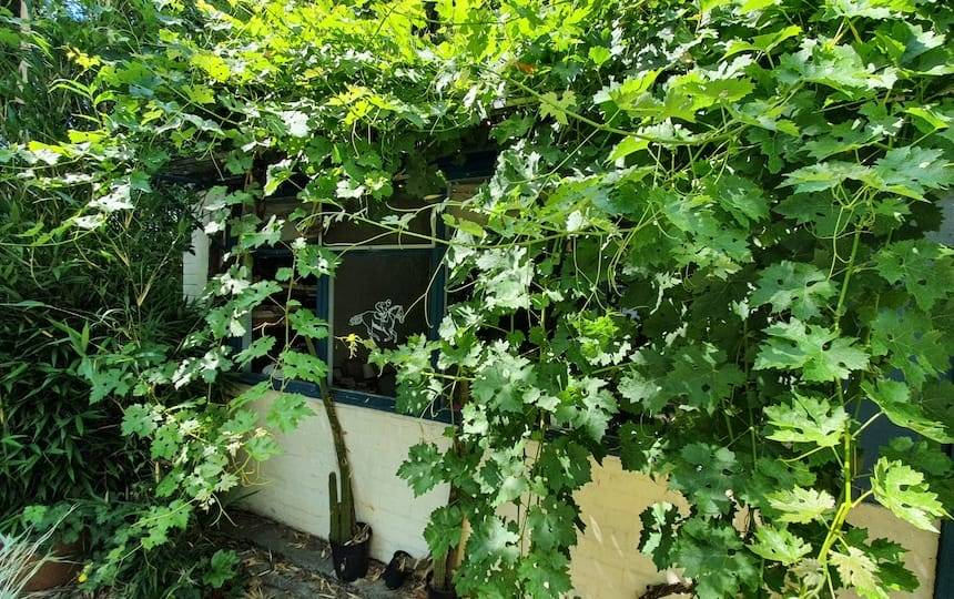 Employing Deciduous Shade In Your Home and Garden