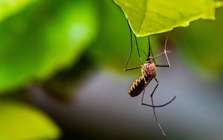 Natural insect Repellent recipe