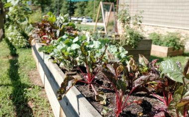 5 Ways to Practice Regenerative Agriculture At Home
