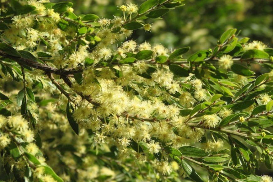 Acacia Seed Dukkah Recipe