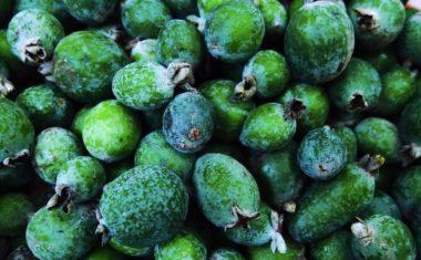 How to Grow Feijoa (Pineapple Guava)