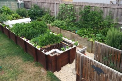 Setting Up An Aquaponics System At Home
