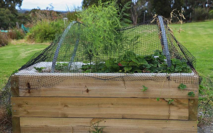 How-to-make-a-wicking-bed